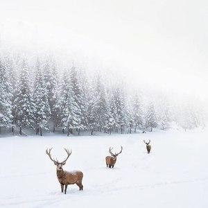 Un peu de douceur en ce lundi .. Vous arrivez vous à vous y faire à ce couvre feu de 18h ? Parce qu'alors moi, pas du tout .. 😳 J'espère que vous avez passé une bonne journée. Bonne soirée ✨🍍 #comfy #calme #bonheur #douceur #hiver #winter #nature #love
