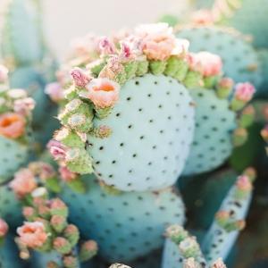 CACTUS 🌵🌸  On a hâte de vous revoir mercredi pour notre réouverture .. Vous découvrirez notre nouveau coin cabines bohème. Belle soirée à vous les nanas 🌸  #boheme #boutiquelananas #conceptstore #bordeaux #cactus #inspiration #pinterest
